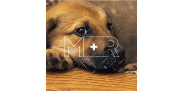 M+R jobs